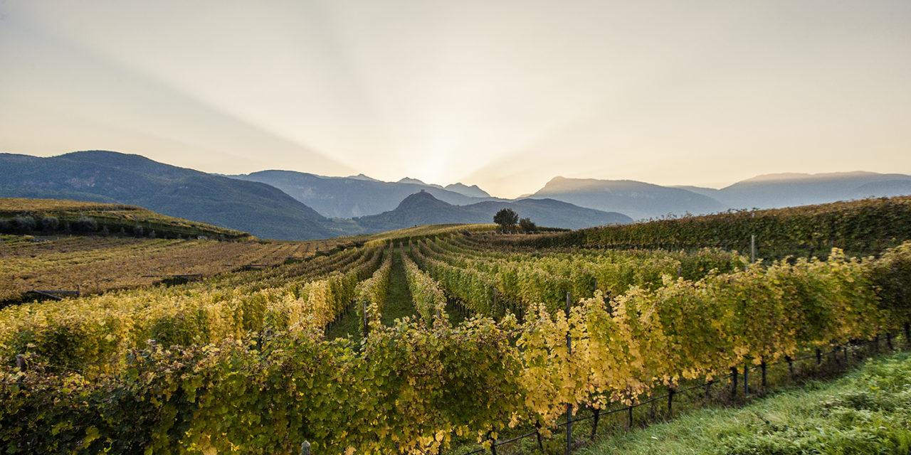 Percorsi di vino in Alto Adige